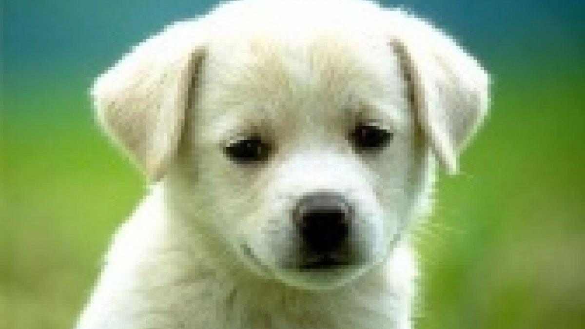 Dotacja na prowadzenie schroniska dla zwierząt przyznana