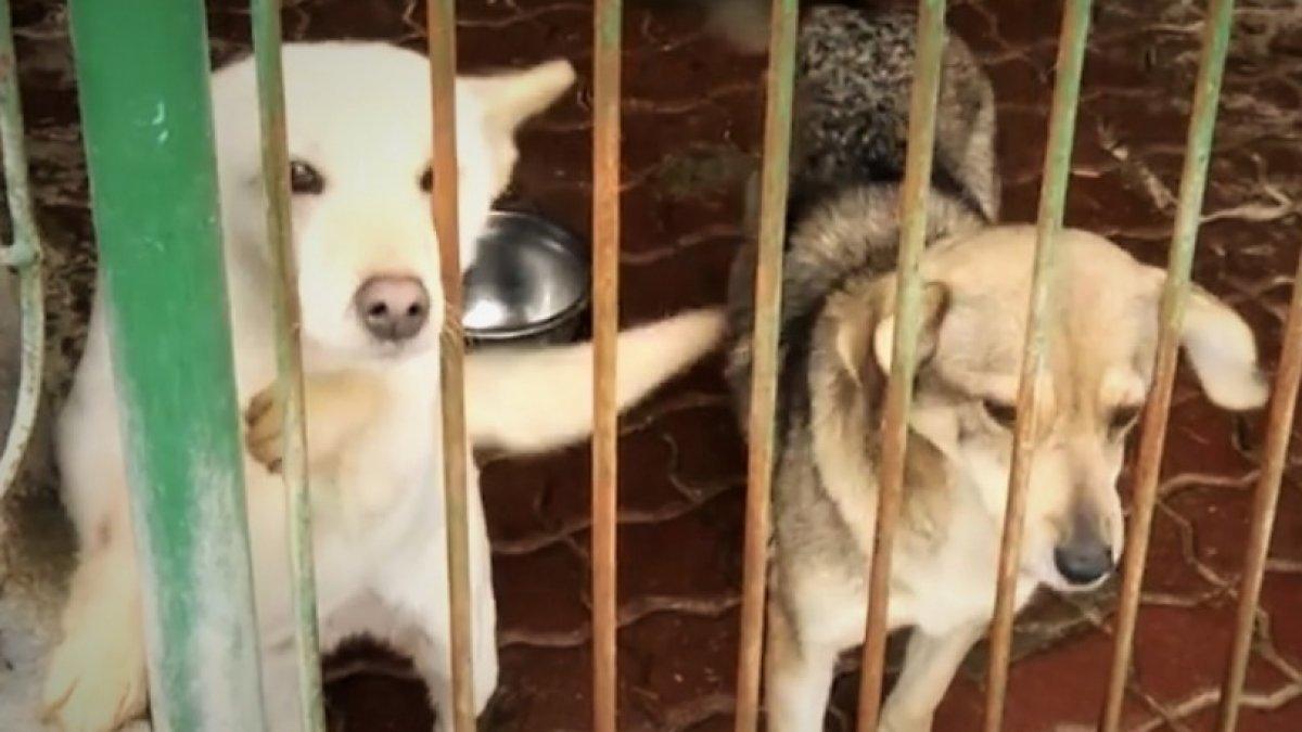 Konkurs na prowadzenie schroniska dla zwierząt